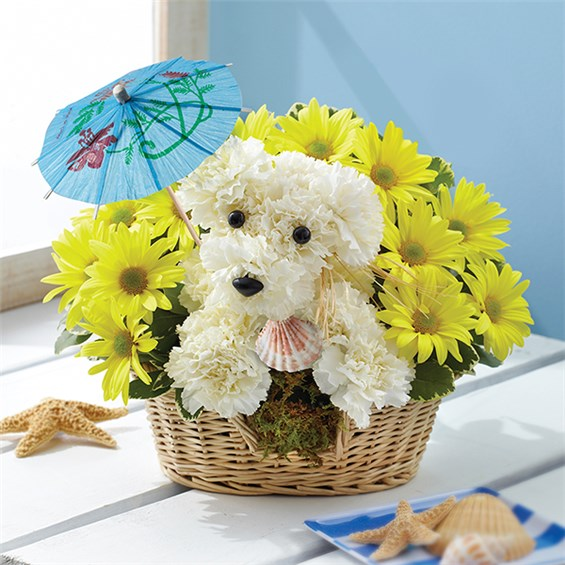 1-800-Flowers® Doggie Paddle™   1-800-Flowers - Carle Place