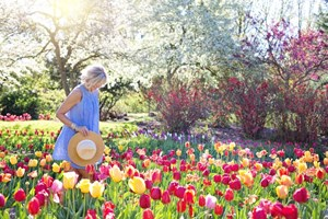 Woman_Walking_Through_Garden_of_Red_and_Yellow_Tulip_Flowers